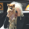 Amanda Bynes' Parents Officially File for Conserva