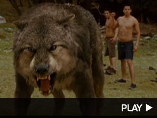 new moon werewolves pack names